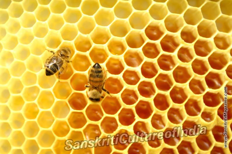 "Australian Honey, World's ""Most Potent"""