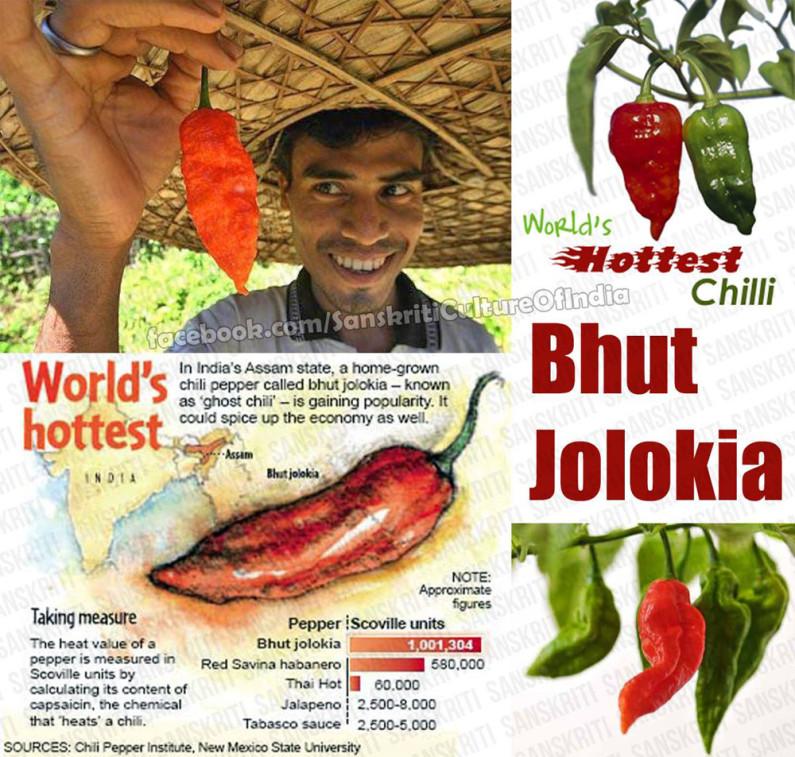 Bhut Jolokia – One of World's Hottest Chilli