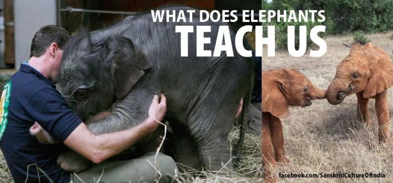 What elephants teach us…