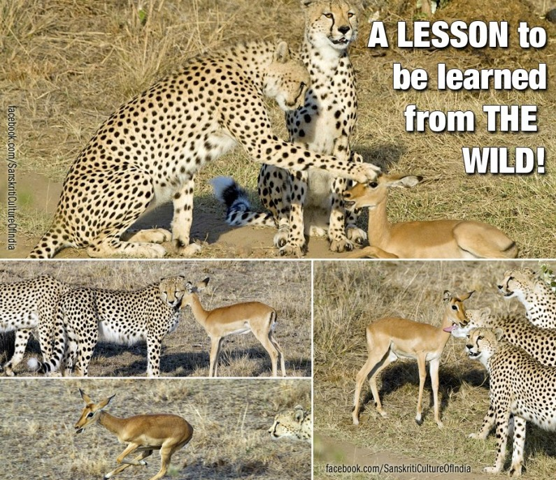 Lesson of the wild…
