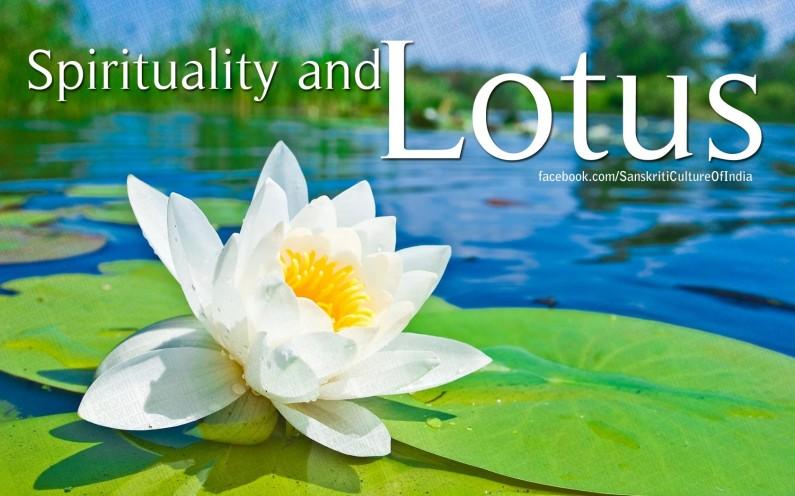 Spiritual Connection of Lotus