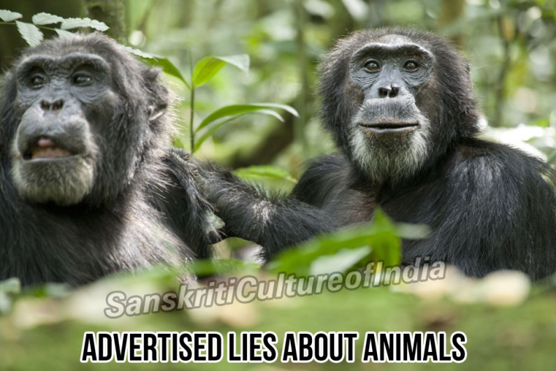 Advertised Lies About Animals To Promote Cruelty