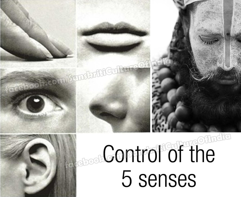 The control of the 5 senses