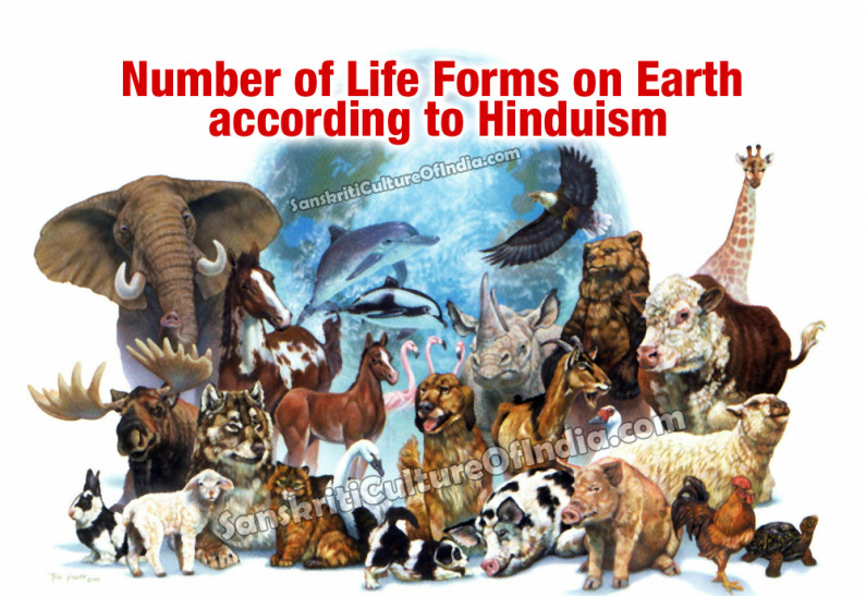 Number of Life Forms on Earth