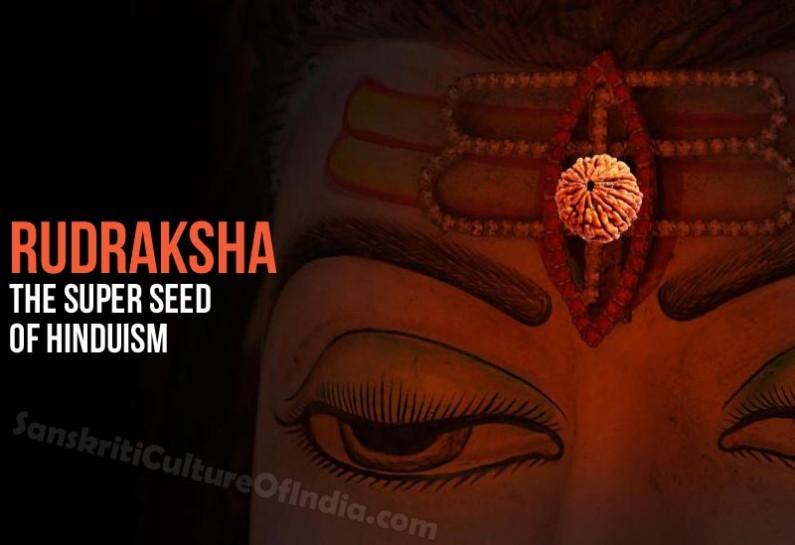Rudraksha – The Super Seed of Hinduism