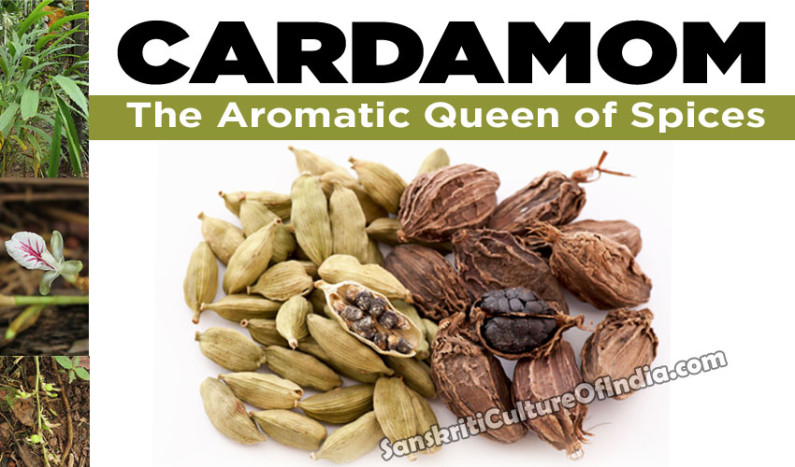Cardamom:  The Aromatic Queen of Spices