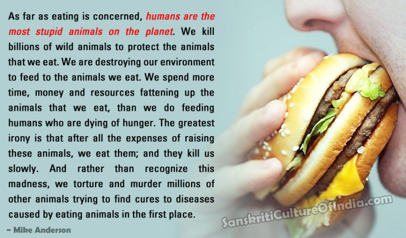 As Far As Eating Is Concerned, Humans Are Stupid Animals