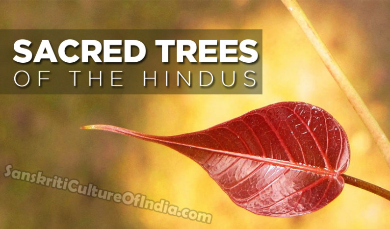 Sacred Trees in Hinduism