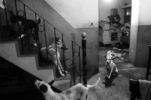 Street Dog Doctor