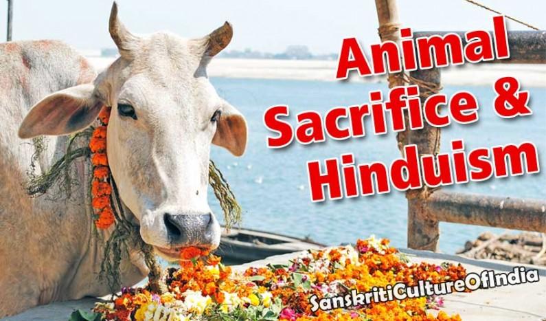 Do Hindus Practice Animal Sacrifice!?
