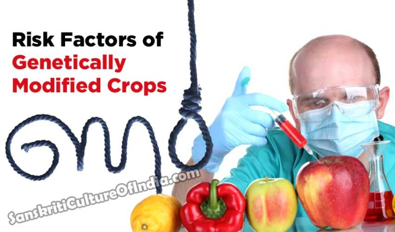Risk Factors of Genetically Modified Crops