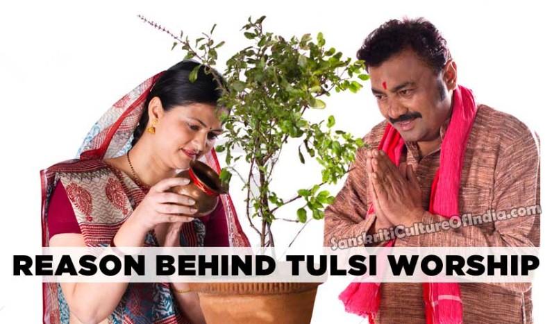 Reasons Behind Tulsi Worship