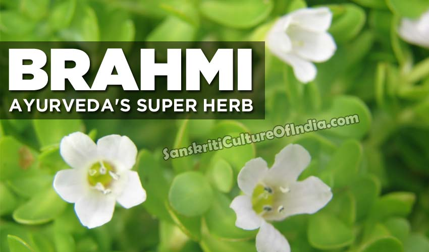 brahmi-ayurveda-super-herb-sanskriti