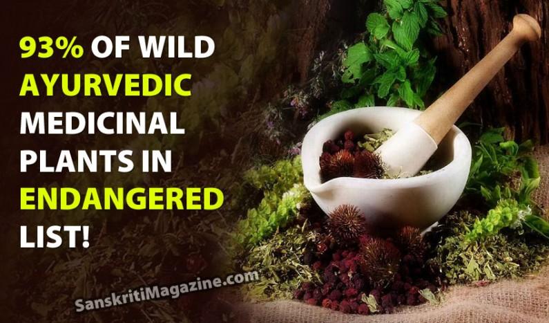 93% of wild Ayurvedic medicinal plants in endangered list
