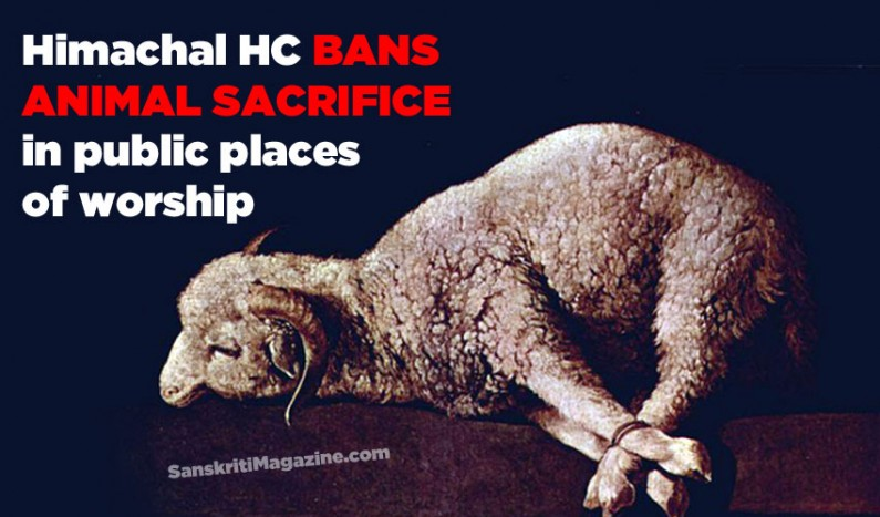 Himachal High Court Bans Religious Animal Sacrifice