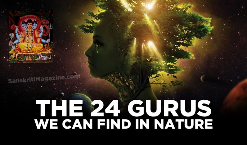 The 24 Gurus we can find in Nature
