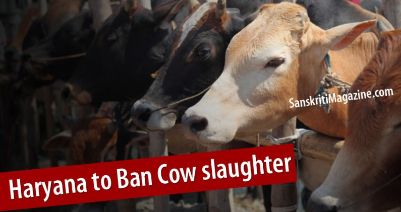 Cow slaughter Ban Bill to be Introduced by Haryana Government