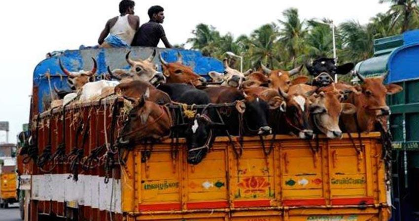 haryana-beef-ban