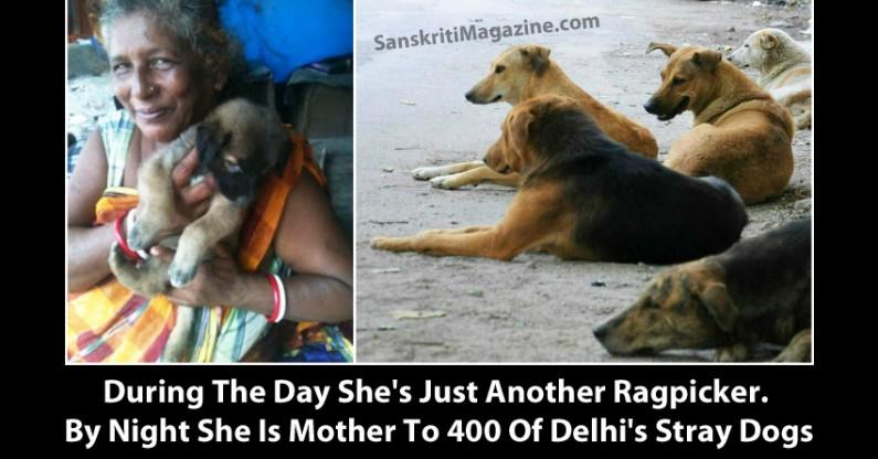 Amma – Ragpicker by the day. By Night She Is Mother To 400 Of Delhi's Stray Dogs