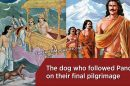 The-dog-who-followed-the-Pandavas-on-their-final-pilgrimage