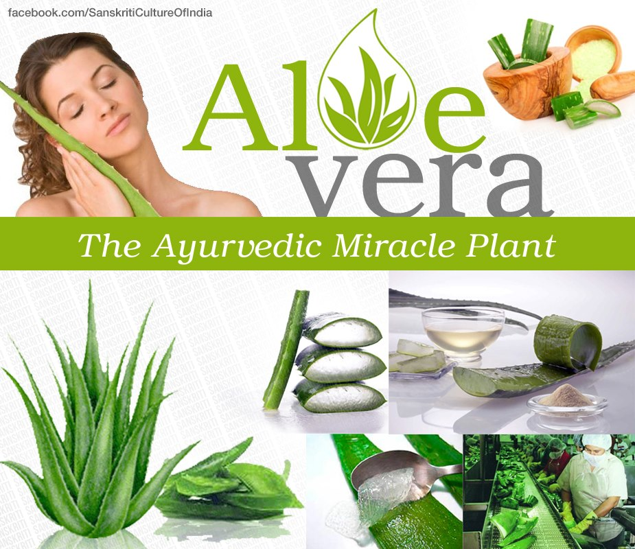 Aloe Vera: The Ayurvedic Miracle Plant
