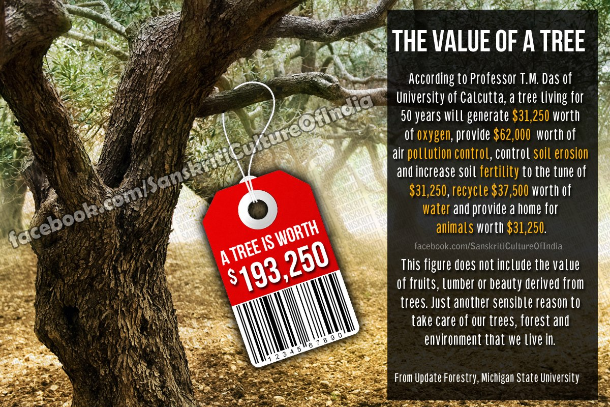 Value of a Tree