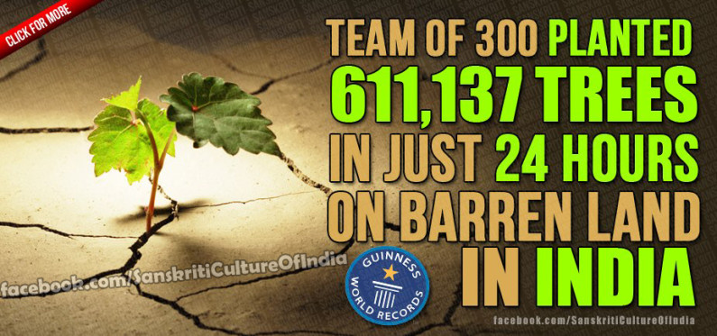 Team of 300 planted 611,137 trees in 24 hours