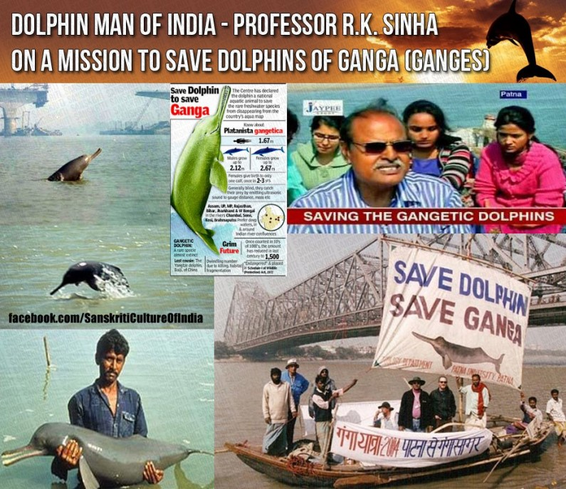 Saving Ganga Dolphins, one at a time