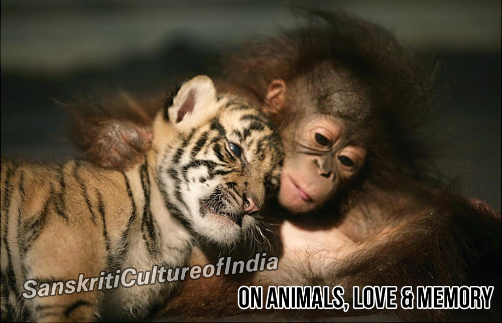 on-animals-love-memory