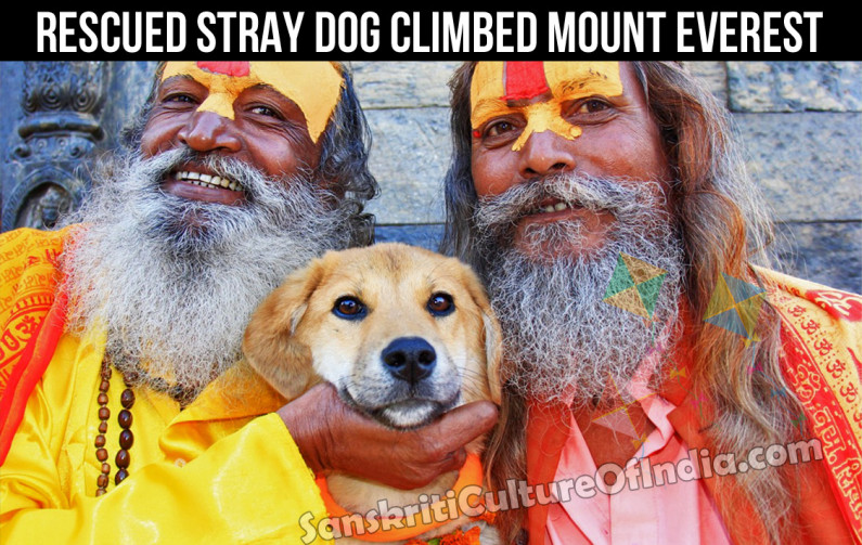 Rescued Stray Dog Becomes First Canine to Climb Mt. Everest