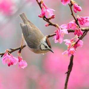 bird-at-spring