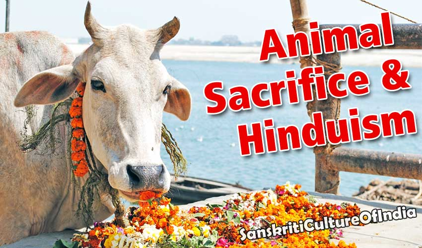 animal_sacrifice