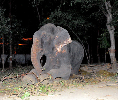 Raju cries as he is rescued after 50 years in captivity