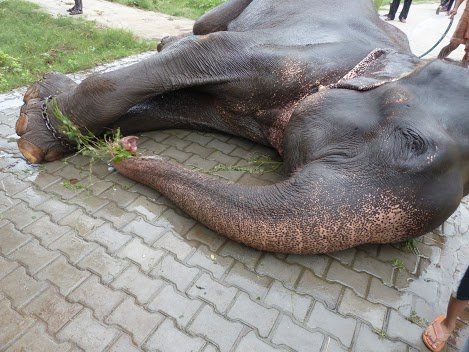 Raju held captive by chains.