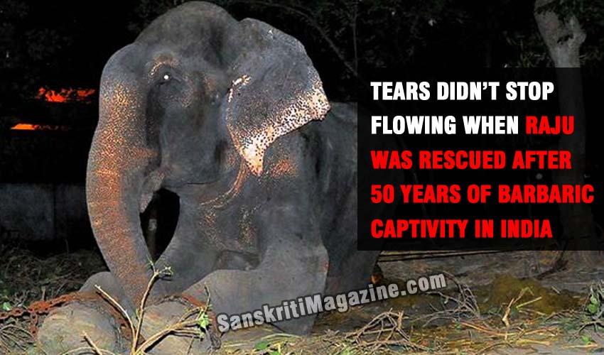 Raju-the-elephant