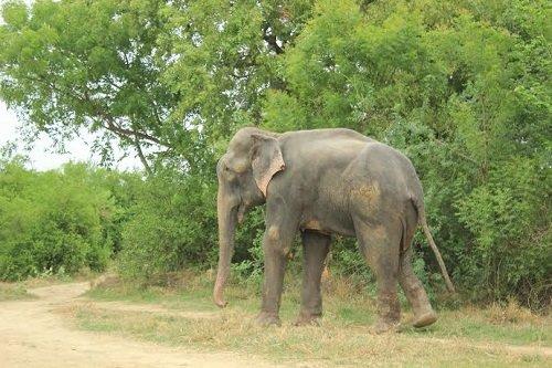 Raju walks free