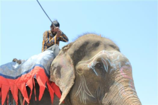 Raju working as a begging elephant