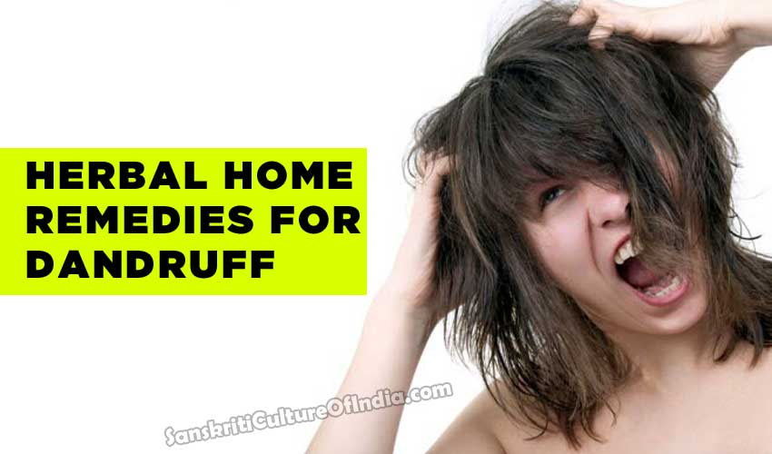 Herbal dandruff treatment