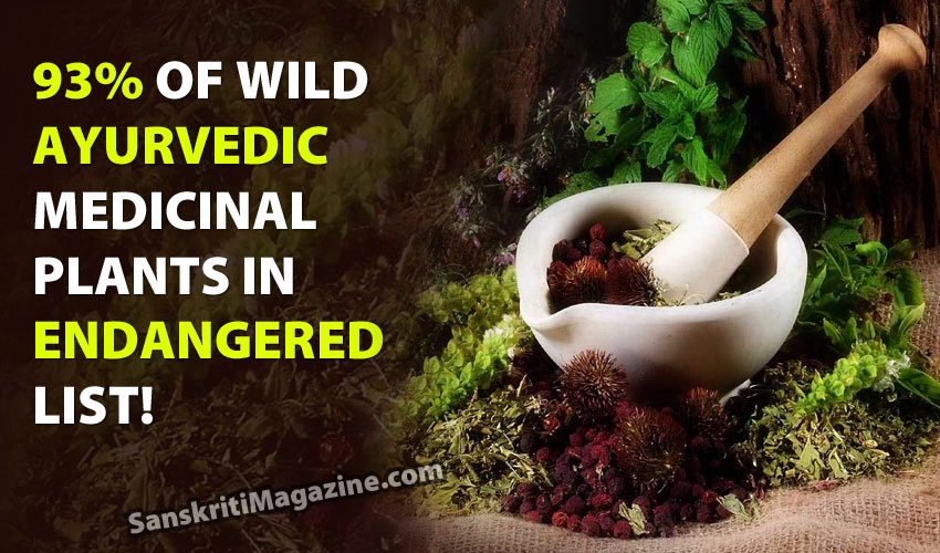 93% of wild Ayurvedic medicinal plants in endangered list