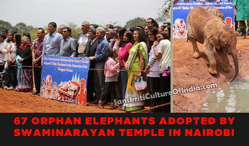 67 orphaned elephants adopted by members of SwamiNarayan Temple in Nairobi