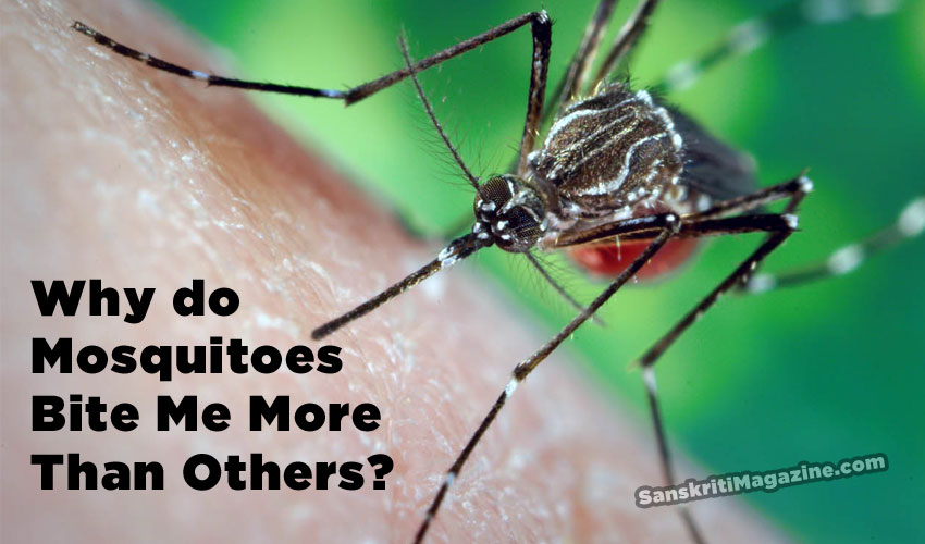 why do mosquitoes bite me more than others?
