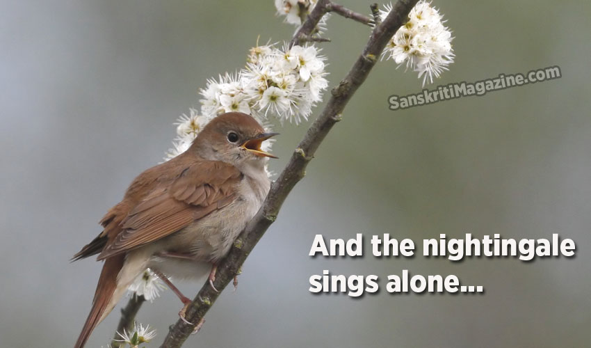 And the nightingale sings alone...