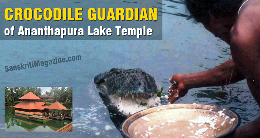 Crocodile guardian of Ananthapura Lake Temple