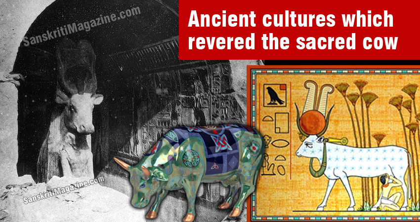 Ancient cultures which revered the sacred cow