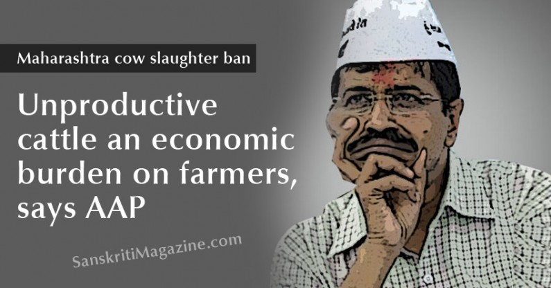 Maharashtra cow slaughter ban: Unproductive cattle an economic burden on farmers, says AAP