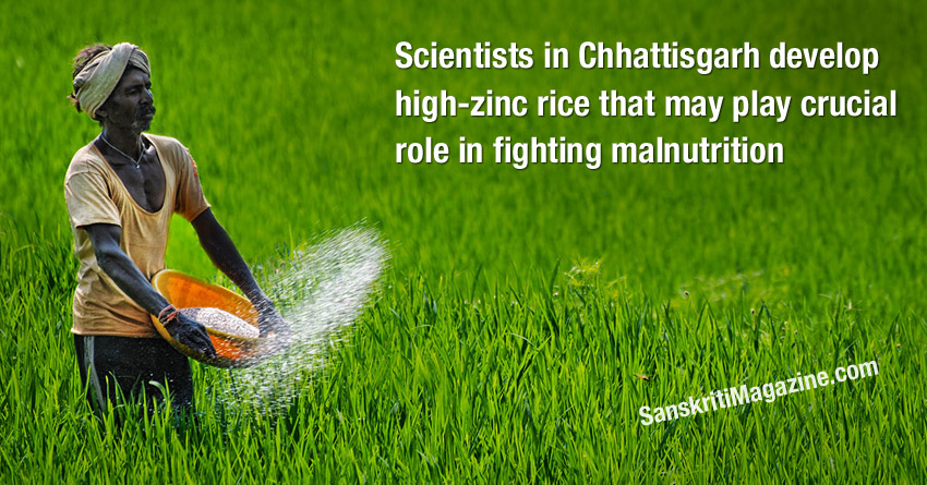 Scientists in Chhattisgarh develop high-zinc rice that may play crucial role in fighting malnutrition