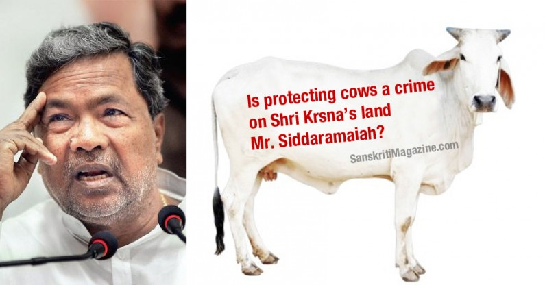 Is protecting cows a crime on shri Krsna's land Mr.Siddaramaiah?