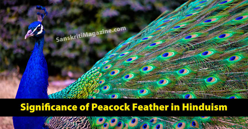 Significance of Peacock Feather in Hinduism