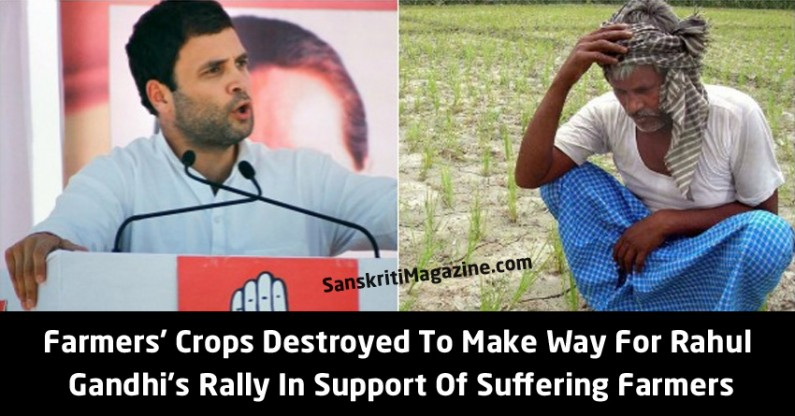 Farmers' Crops Destroyed To Make Way For Rahul  Gandhi's Rally In Support Of Suffering Farmers