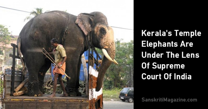 Kerala's Temple Elephants Are Under The Lens Of Supreme Court Of India